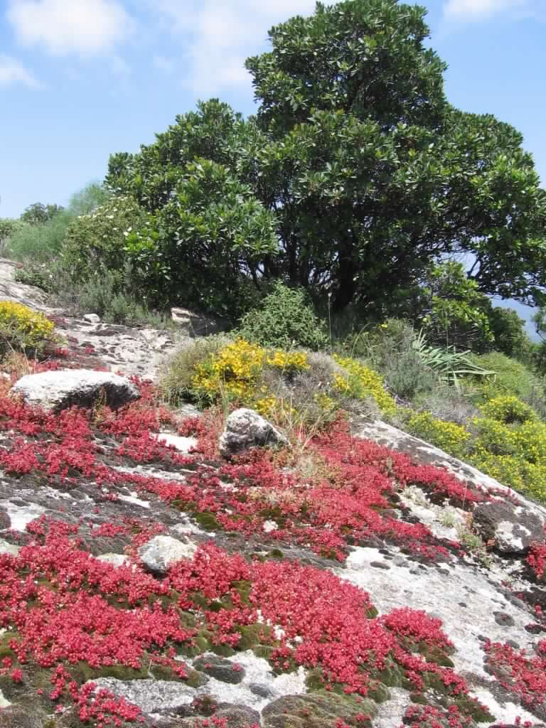 Monte Nieddu San Teodoro – Turrione